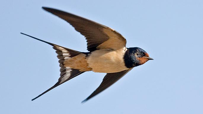 Swallows Leave